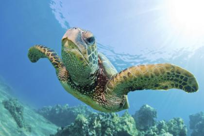 Tortue & snorkeling
