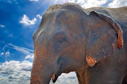 Eléphant près de Chiang Mai