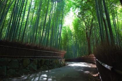 Bamboo Grove à Arashiyama - Kyoto