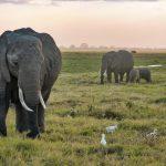 Eléphants dans le parc national Amboseli