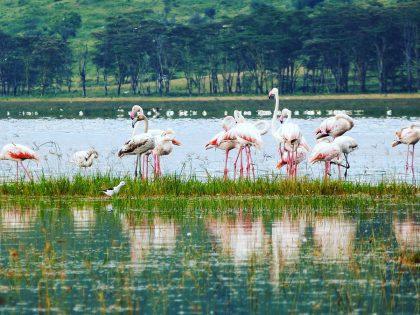 Lac Nakuru et ses flamants roses